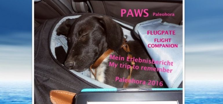 paws-flugpate-flight-companion